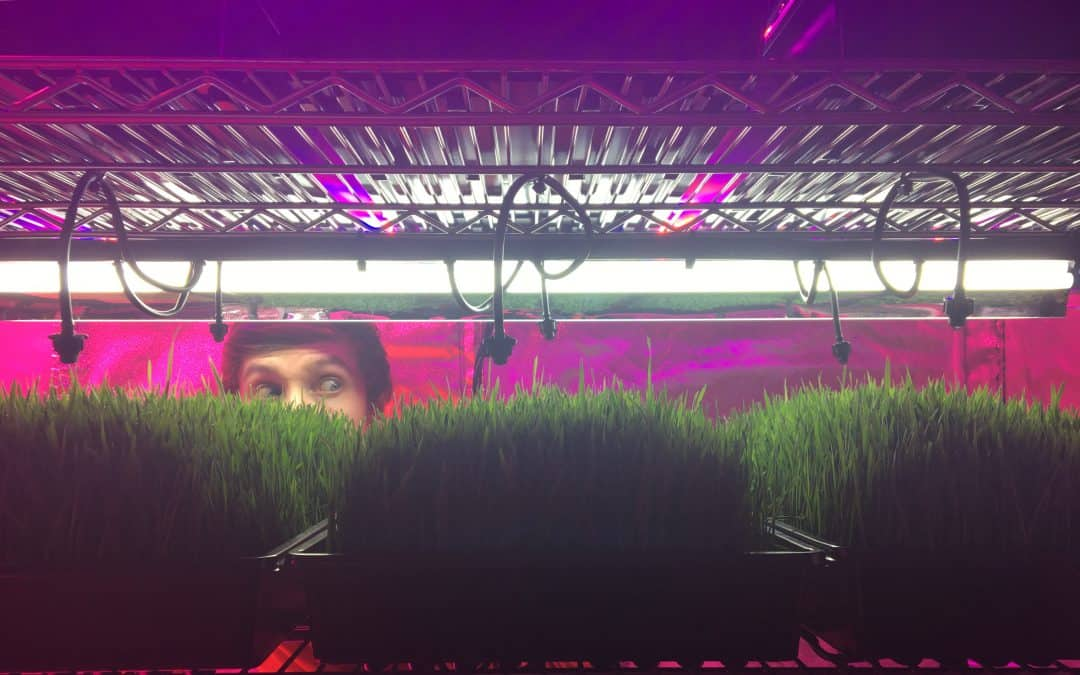 Growing Wheatgrass With and Without Soil At Home | Start Juicing Homegrown 'Green Blood'