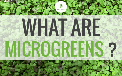 What Are Microgreens?