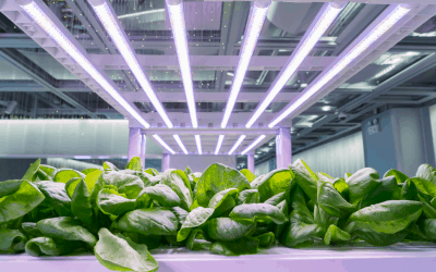What Is Hydroponics Gardening? | A Complete Beginner's Guide