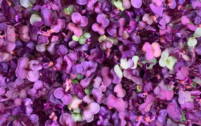 What Are Microgreens & How Can I Start Growing Them At Home?