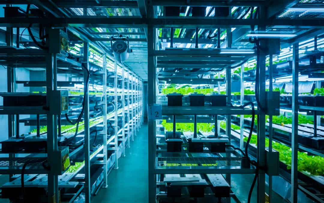 The Complete Guide To Vertical Farming | What It Is and Why It's So Important