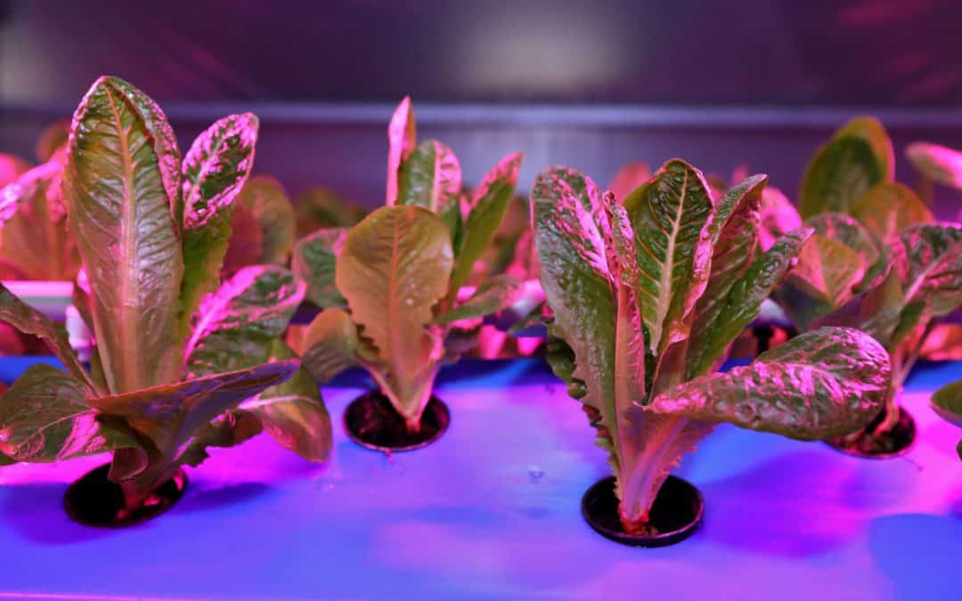 What Is Aeroponics Gardening?