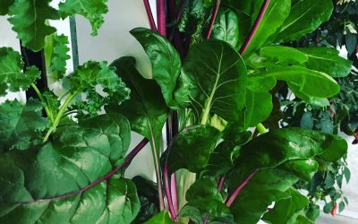 Starting An Indoor Hydroponic Vegetable Garden | A Complete Beginners Guide